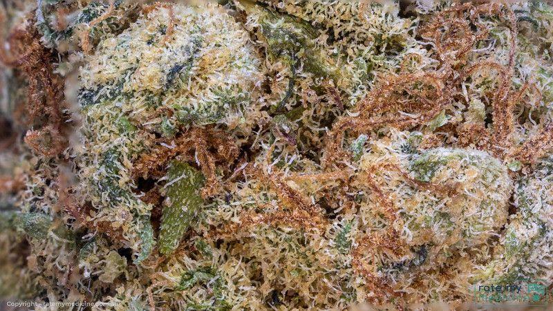 Cannatrek Jasmin Medical Cannabis Flower Bud 2.5 x macro