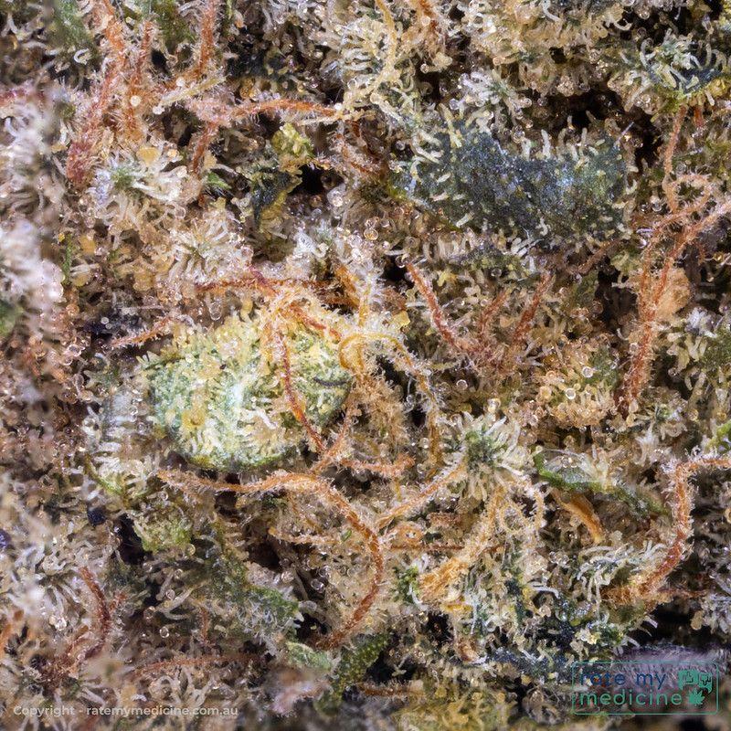 Cannatrek Daylesford Medical Cannabis Flower Bud 2.5 x Full macro