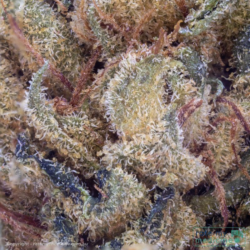 Cannatrek Jerusalem medical Cannabis Flower 2.5x Magnification Macro sq