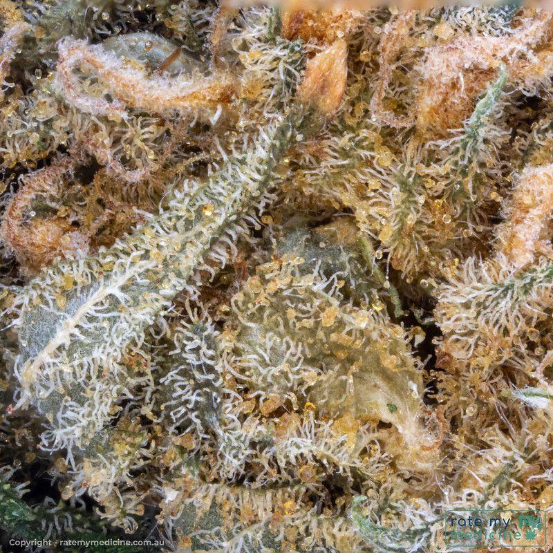 Cannatrek Lemnos Medical Cannabis Bud2.5x macro sq